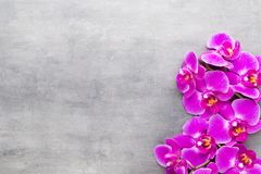Beauty orchid on a gray background. Spa scene. Orchid and spa stones on a stone background. Spa and wellnes scene Royalty Free Stock Photography