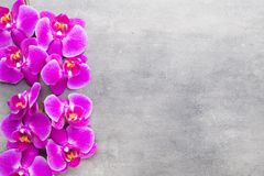 Beauty orchid on a gray background. Spa scene. Stock Photography