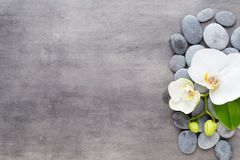 Beauty orchid on a gray background. Spa scene. Orchid and spa stones on a stone background. Spa and wellness scene Stock Image