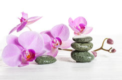 Orchid and spa stones on a white background. Beautiful pink flowers on a branch. Stock Photos