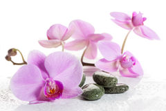Orchid and spa stones on a white background. Beautiful pink flowers on a branch. Stock Image