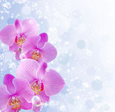Orchid and stars Royalty Free Stock Photos