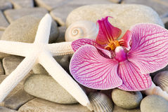 Orchid still life Royalty Free Stock Images