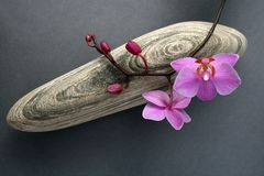 Orchid-stone royalty free stock images