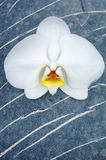 Orchid and stone. On beach Stock Photos