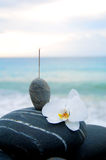 Orchid and stone. On beach Royalty Free Stock Photo