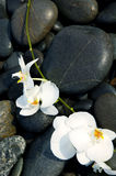 Orchid and stone. On beach Stock Photo
