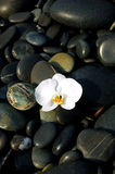 Orchid and stone. On beach Stock Image
