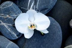 Orchid and stone. On beach Royalty Free Stock Photography