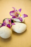 Orchid with stone on brown background Stock Photography