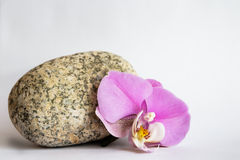 Orchid stone Stock Image