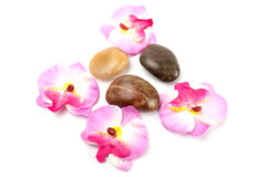 Orchid and stones Royalty Free Stock Image
