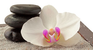 Orchid and stones Royalty Free Stock Photos