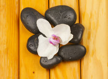 Orchid and stones Stock Images