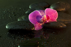 Orchid and stones in night Stock Image