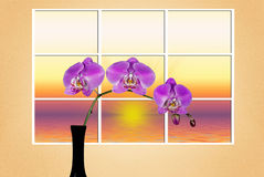 Orchid Sunrise Stock Photos