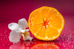 Orchid tangerine. Orchid with tangerine on purple background Royalty Free Stock Images