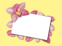 Orchid Template Stock Image