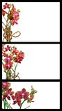Orchid templates Royalty Free Stock Photography
