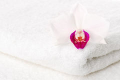 Orchid on towel Stock Images