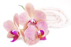 Orchid and Towel Stock Image