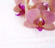Orchid on Towel Royalty Free Stock Photo
