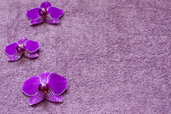 Orchid on the towel spa cosmetic background Royalty Free Stock Photography