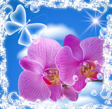 Orchid and transparent butterfly stock illustration