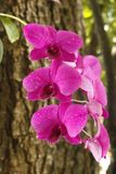 Orchid  on tree Royalty Free Stock Images