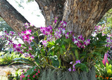 Orchid on tree Stock Photos