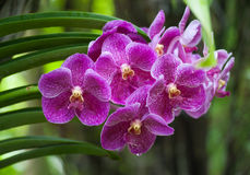 Orchid Tropical Flower Nature Background Stock Image