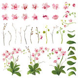 Orchid Tropical Flowers Floral Elements in Watercolor Style. Vector Stock Photo