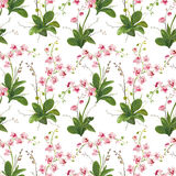 Orchid Tropical Leaves and Flowers Background. Seamless Pattern Royalty Free Stock Photography