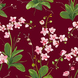 Orchid Tropical Leaves and Flowers Background. Seamless Pattern Royalty Free Stock Image