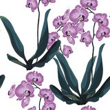 Orchid Tropical Leaves and Flowers on white backdrop. Seamless Pattern for design, card, print or background stock illustration