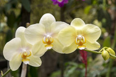 Orchid in the tropics Stock Photo