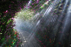 Orchid tunnel. Beautiful light along orchid tunnel in Flora Festival at Chiang Rai Stock Images