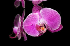 Orchid under water Stock Images