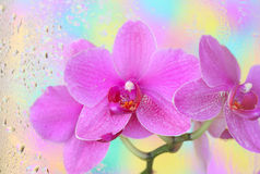 Orchid under wet glass Stock Photos