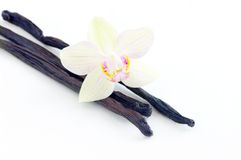 Orchid with vanilla beans Royalty Free Stock Photo