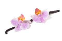 Orchid and vanilla Royalty Free Stock Photo