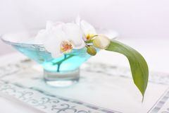 Orchid in vase. Orchid close up over blue water in a glass vase Royalty Free Stock Photography