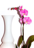 Orchid and vase Stock Photos