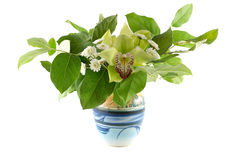 Orchid in a vase with green leaves Stock Images