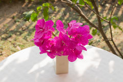 Orchid in a vase on the table. Pink Orchid in a vase on the table Royalty Free Stock Photo