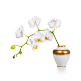 Orchid in vase Royalty Free Stock Images