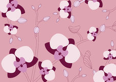 Orchid vector background Royalty Free Stock Photo