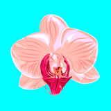 Orchid. Vector illustration. Beautiful flower card Stock Image