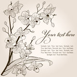 Orchid vintage. Beautiful vintage orchid background, vector sketch illustration Royalty Free Stock Image