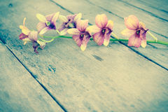 Orchid vintage. Stock Photography